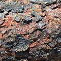 Кора эвкоммии находится в составе кардитонуса