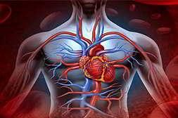 Норматен воздействует на все органы нервной системы