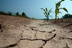 Удобрение Агроплант повышает производительность почвы