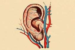 Лоропакс способствует улучшению кровообращения.